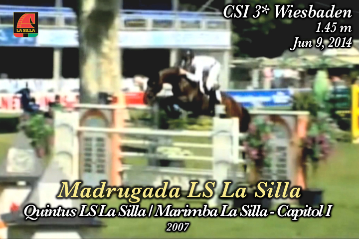 La Silla Horses on the Showgroundls gallery